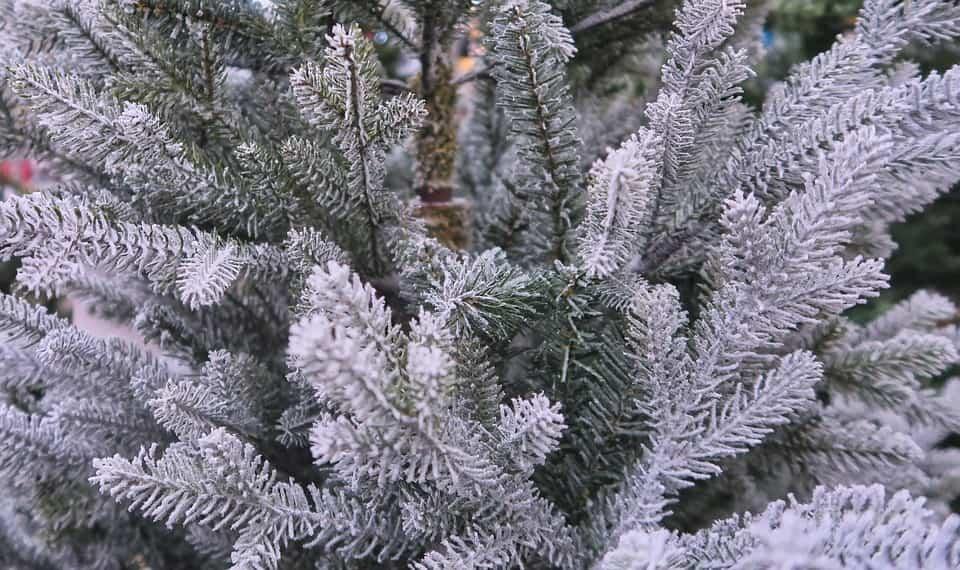 Ideas y tendencias a la hora de decorar el árbol de Navidad 3