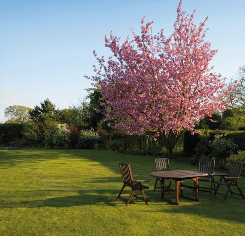 Cómo cuidar tu jardín en verano: ideas y consejos 3