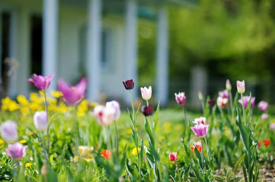Cómo cuidar tu jardín en verano: ideas y consejos 1