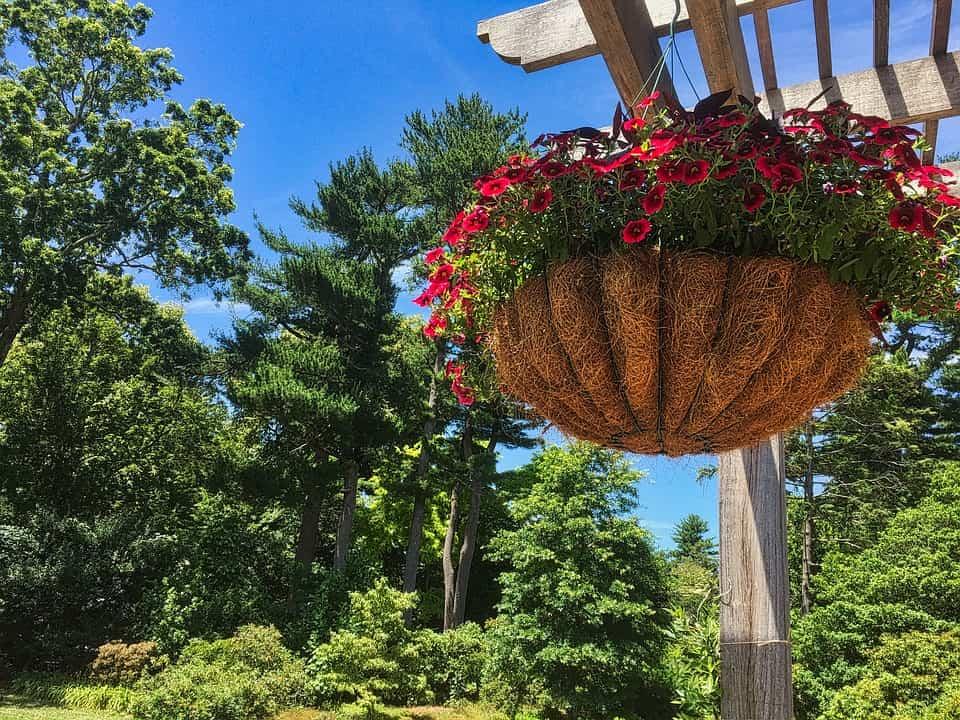 Estas ideas de decoración con plantas colgantes se te antojarán para tu hogar