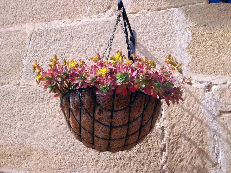 decoración con plantas colgantes