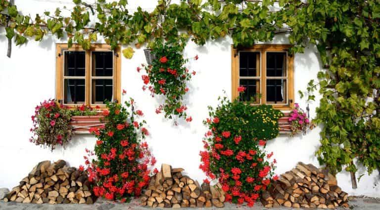 Las claves para decorar tu fachada con plantas trepadoras
