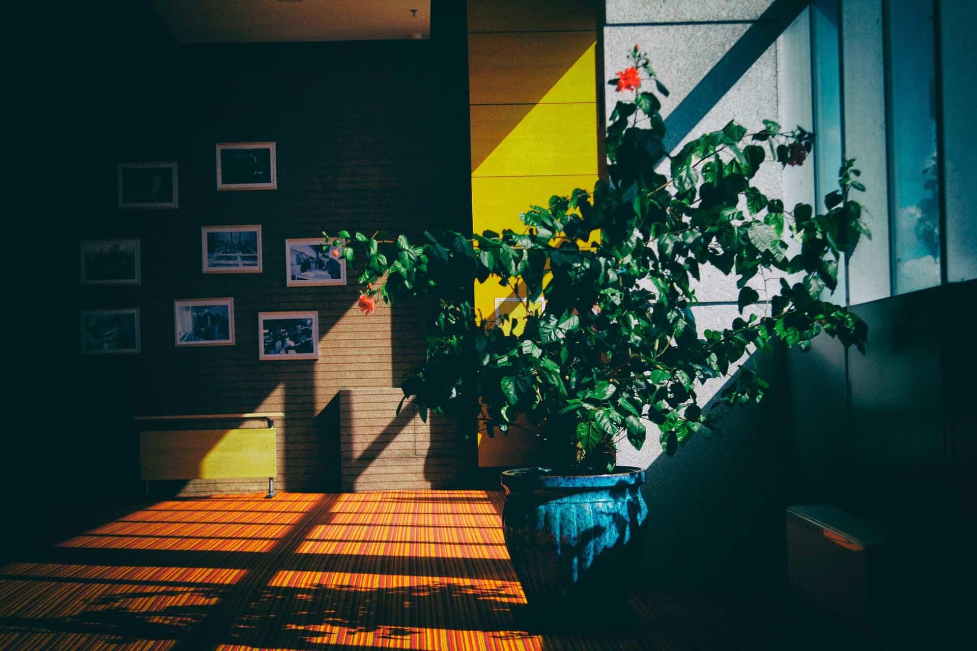 plantas en el salon