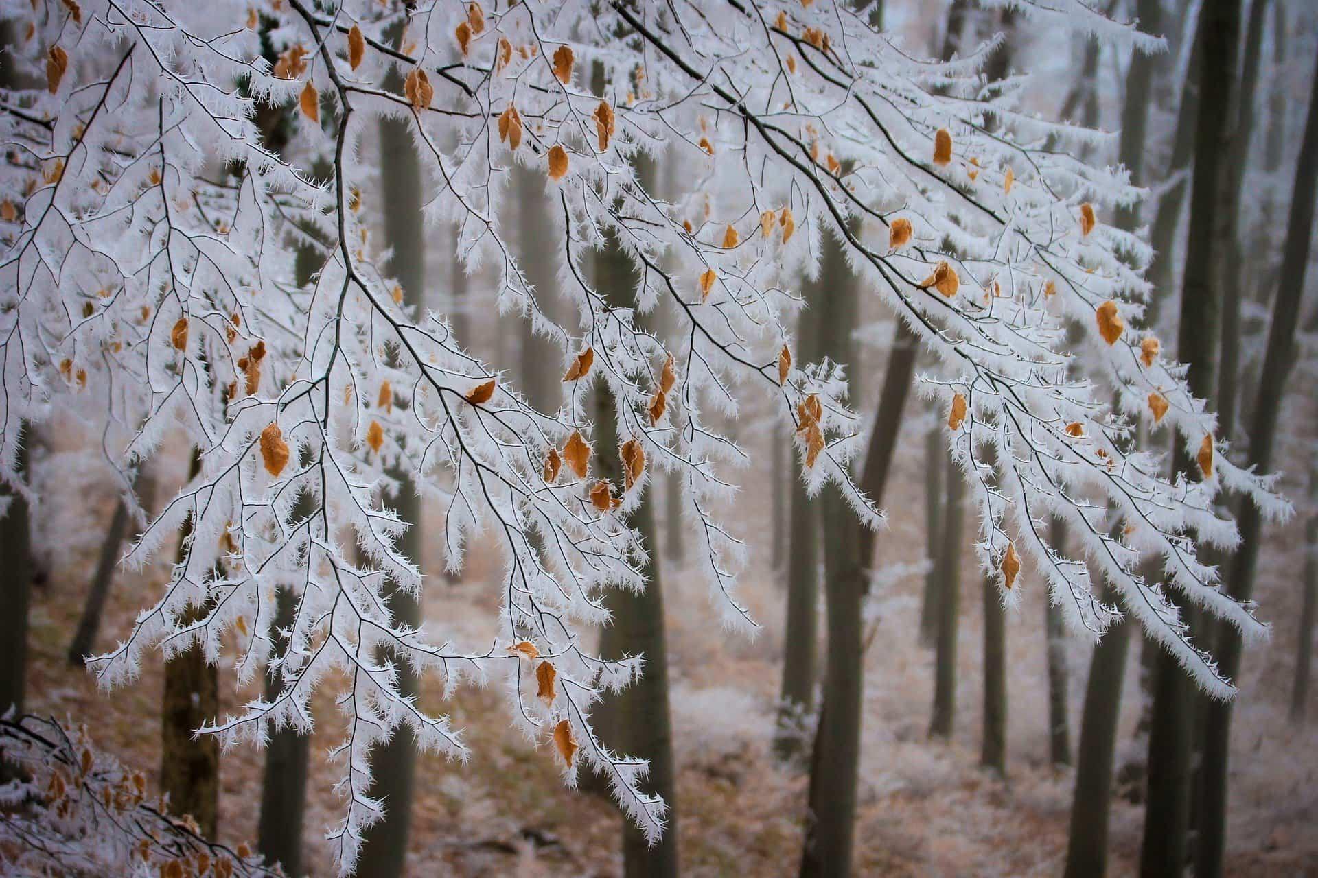 plantas nieve Filomena