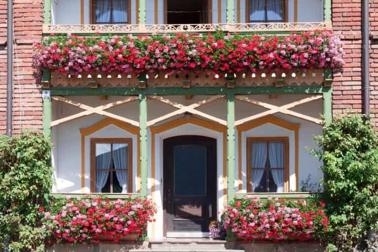 Plantas resistentes al calor y al sol para tu balcón o terraza