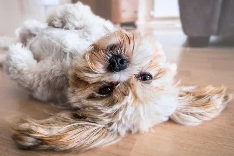Suelos ideales para tu casa si tienes mascota
