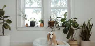 beneficios de las plantas en el interior del hogar