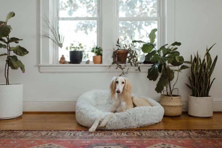 7 beneficios de decorar con plantas de interior